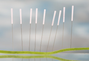 cupuncture needles in Nasturnim leaf. The veins in the leaf represent the energy lines that acupuncturists use to cure various ailments.