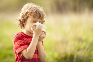 Little blond boy sneezing due to allergy related problems, on a sunny day outdoors. He is holding a handkerchief in his hands, looking away. Copy space available.